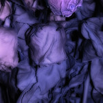 Bouquet of ying roses? a false-color infrared image